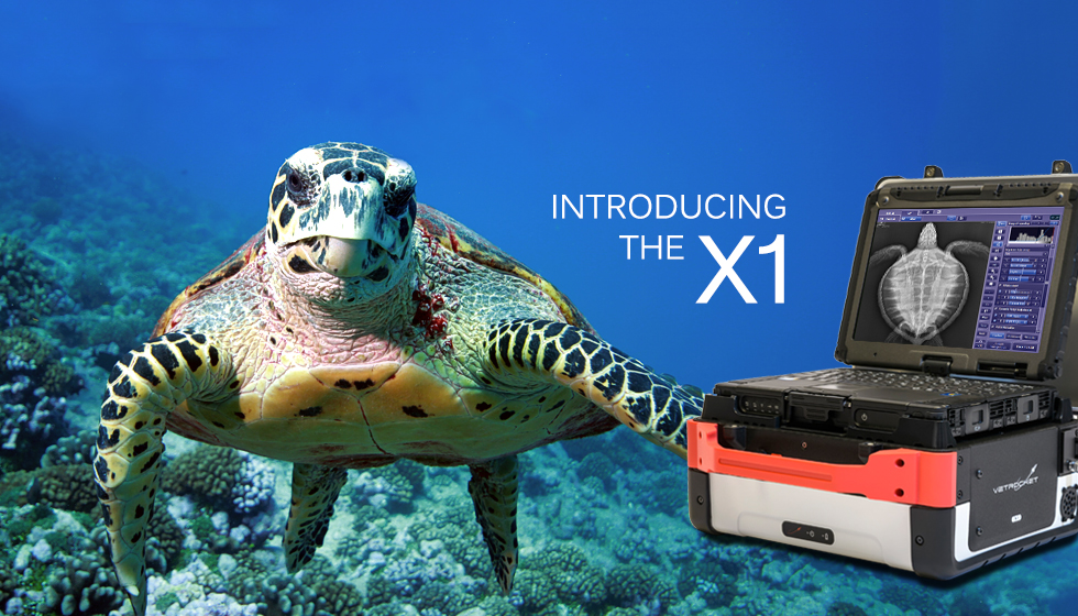 picture of sea turtle underwater and the VetRocket X1 with sea turtle x-ray