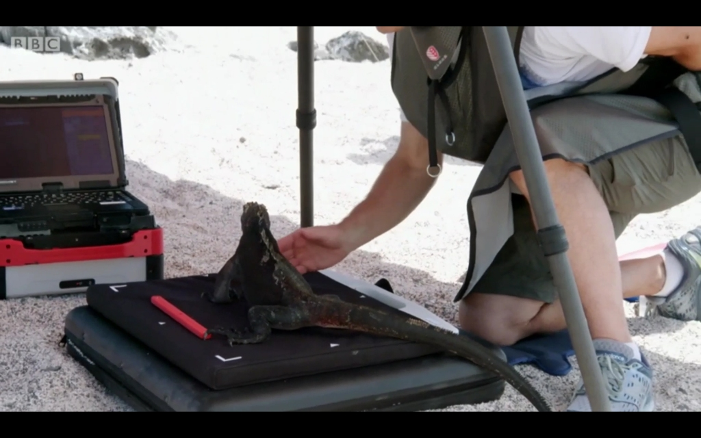 image of Galapagos marine iguana and vet rocket x1
