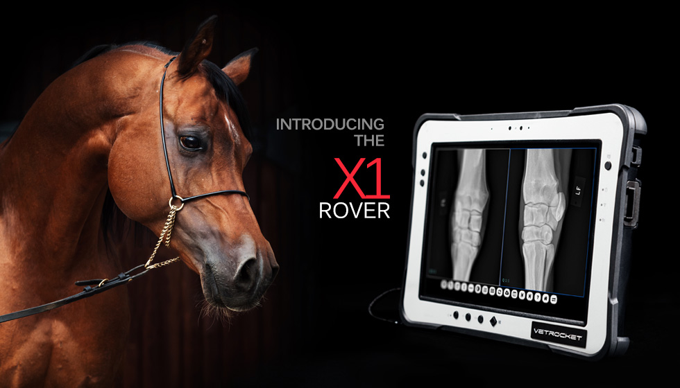 image of a horse and the VetRocker X1 Rover system,